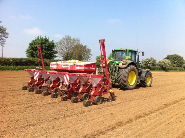 Maize Drilling